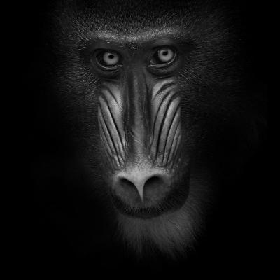Eye Contact-Ruud Peters-Photographic Print