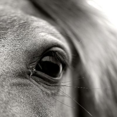 Eye of Horse-Gabriella Nonino-Photographic Print