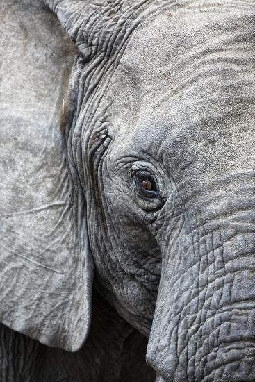Eye of the African elephant, Serengeti National Park, Tanzania, East Africa, Africa-Ashley Morgan-Photographic Print