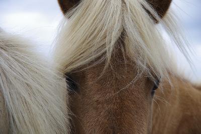 Eyes of Icelandic Horse-Igor Dymov-Photographic Print