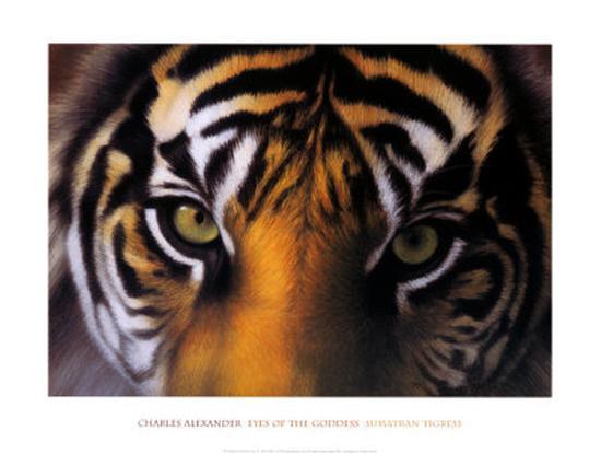 Eyes of the Goddess: Sumatran Tigress-Charles Alexander-Art Print