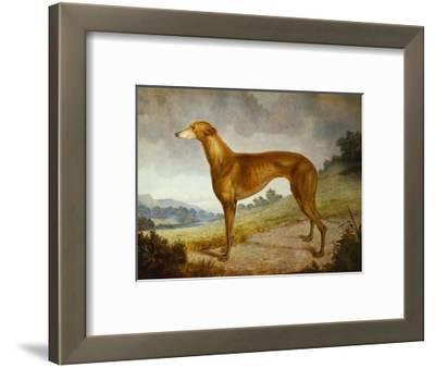 A Tan Greyhound Bitch in an Extensive River Landscape