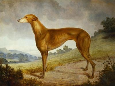 A Tan Greyhound Bitch in an Extensive River Landscape by F^ H^ Roscoe