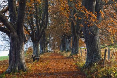 Chestnut Tree Allee, Bavaria, Germany