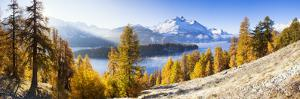 Larch Trees by Lake Sils and Piz De La Margna, Engadin, Switzerland by F. Lukasseck