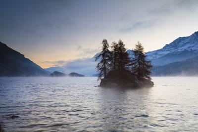 Larch Trees on Island in Lake Sils, Engadin, Switzerland