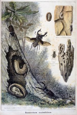 Harmful Insects, 1897 by F Meaulle