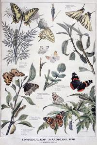 Harmful Insects: Daylight Butterflies, 1897 by F Meaulle