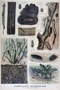 Insects Harmful to Furs, 1897 by F Meaulle
