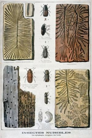 Xylophagous Insects That are Destructive to Forests, 1897 by F Meaulle