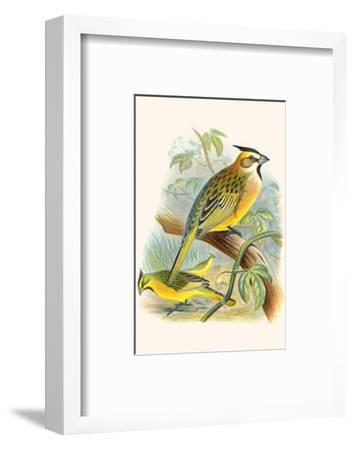 Green Cardinal