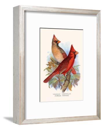 Virginian Cardinal