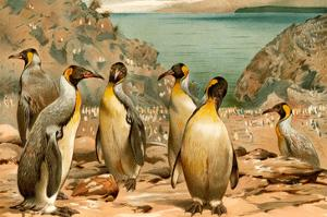 Penguins by F^W^ Kuhnert