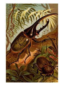 Scarab Beetles by F.W. Kuhnert