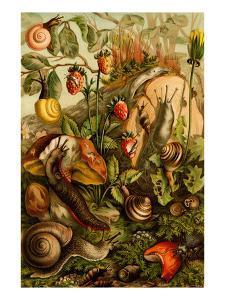 Snails, Gastropods, Mollusks by F.W. Kuhnert