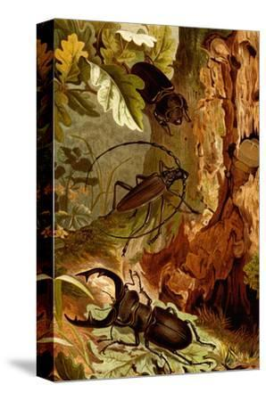Stag and Longhorn Beetles