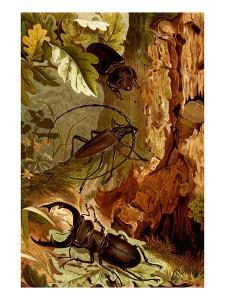 Stag and Longhorn Beetles by F.W. Kuhnert