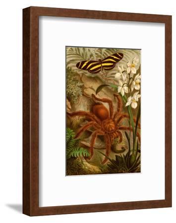 Tarantula - Bird Eating Spider