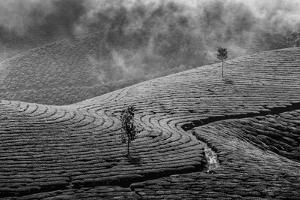 Kerala India Travel Background - Green Tea Plantations in Munnar, Kerala, India - Tourist Attractio by f9photos