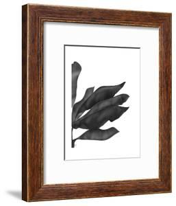 Banana Leaves 1, Black on White by Fab Funky