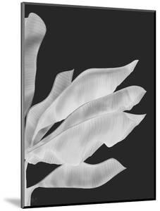 Banana Leaves 1, White On Black by Fab Funky