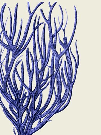 Blue Corals 2 c by Fab Funky