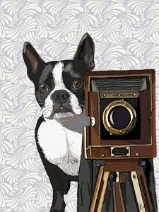 Boston Terrier Photographer by Fab Funky