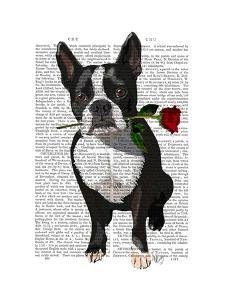 Boston Terrier with Rose in Mouth by Fab Funky