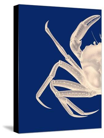 Contrasting Crab in Navy Blue a
