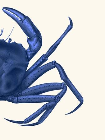 Contrasting Crab in Navy Blue b