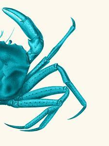 Contrasting Crab in Turquoise a by Fab Funky