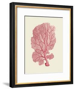 Corals Coral On Cream c by Fab Funky