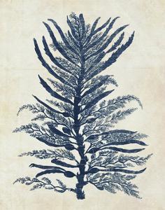 Indigo Blue Seaweed 1 b by Fab Funky