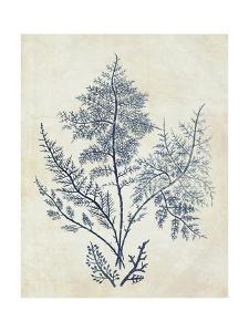 Indigo Blue Seaweed 1 d by Fab Funky