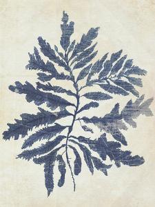 Indigo Blue Seaweed 2 b by Fab Funky
