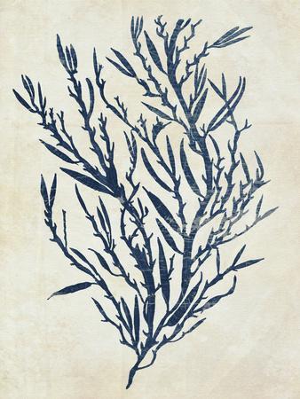 Indigo Blue Seaweed 3 b