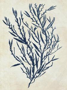 Indigo Blue Seaweed 3 b by Fab Funky