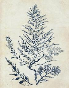 Indigo Blue Seaweed 3 d by Fab Funky