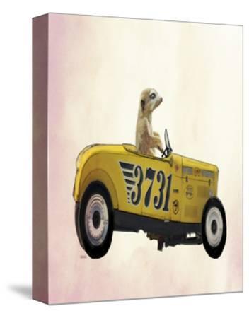 Meerkat in Hot Rod