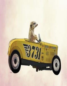 Meerkat in Hot Rod by Fab Funky