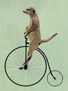 Meerkat on Black Penny Farthing by Fab Funky