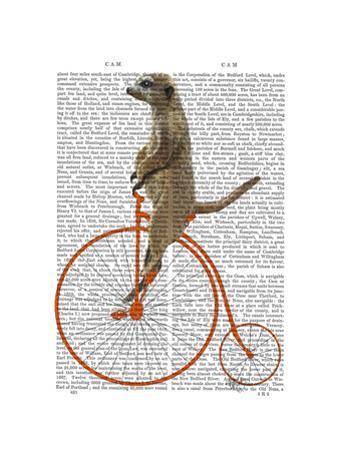 Meerkat on Orange Penny Farthing by Fab Funky