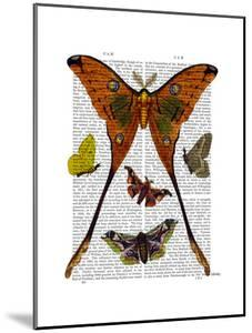 Moth Plate 1 by Fab Funky