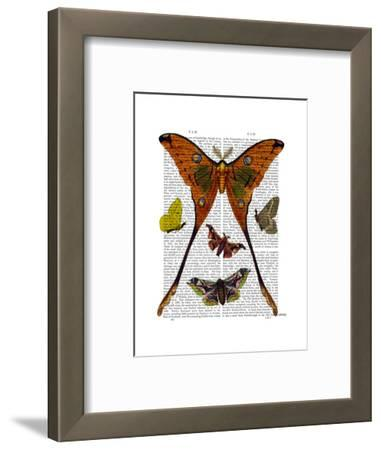Moth Plate 1