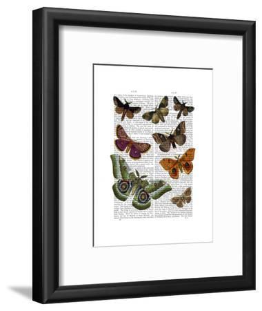 Moth Plate 2