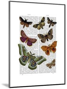 Moth Plate 2 by Fab Funky