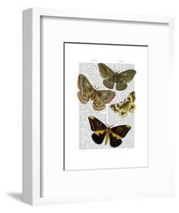 Moth Plate 3 by Fab Funky
