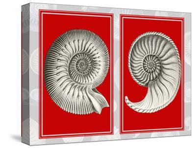 Nautilus Shells On Red