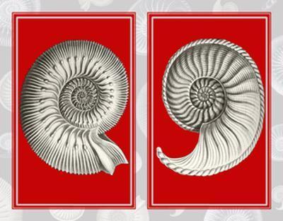 Nautilus Shells On Red