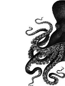 Octopus Black and White a by Fab Funky